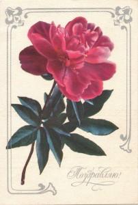 """Открытка с изображением тёмно-розового пиона и текстом """"Поздравляю!"""""""