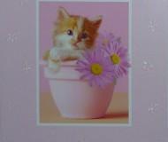 самые красивые малыши (котёнок)