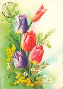 акация серебристая и тюльпаны