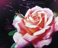 роза на фиолетовом фоне